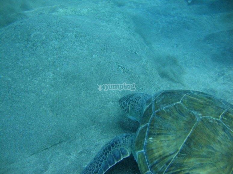 Tartaruga nell'acqua