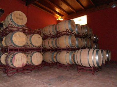 Bodegas y Viñedos Tavera