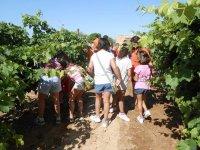 Acercamos la viticultura a los niños