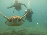 Diving behind the tortoise
