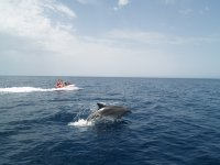Accompanied by the dolphins
