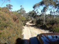 Atravesando el bosque en todoterreno