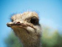 食品难民鸵鸟农场