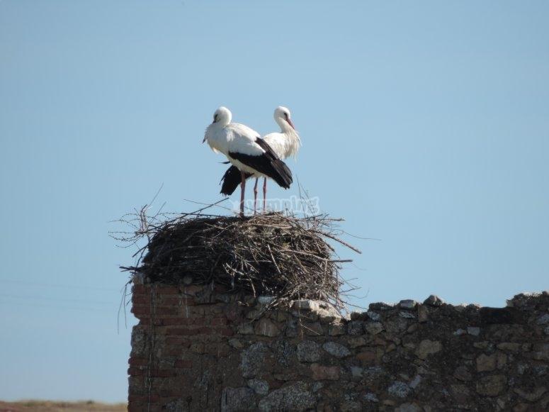 Las cigüeñas en el nido