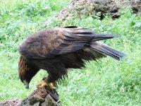 Excursión avistamiento de aves en Casar de Cáceres