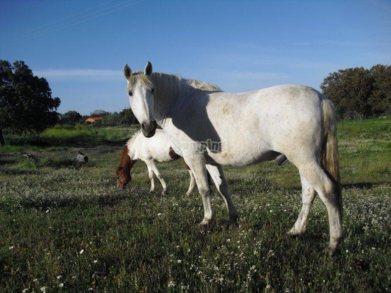 Horse route in Casar de Cáceres