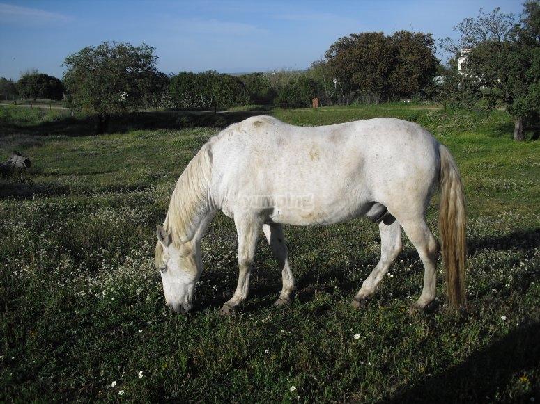 Horse riding in Casar de Cáceres