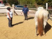 Terapia con los equinos