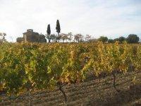 somontano vineyards