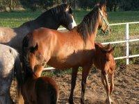 Horses and postro