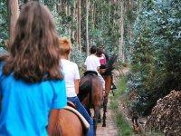 Bosques de eucaliptos, a caballo