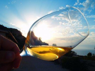Wine Routes Mallorca Enoturismo