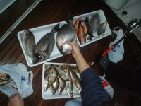 nuestra pesca del dia