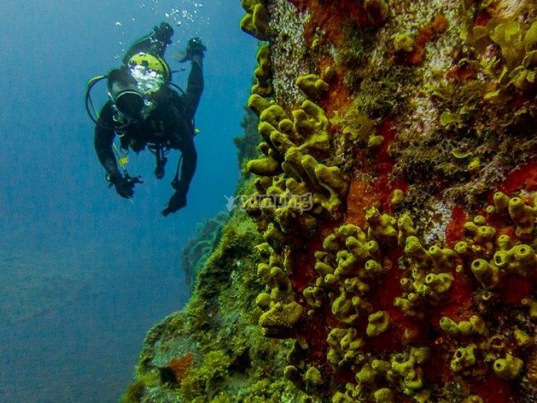 Buceando en Puerto de Naos