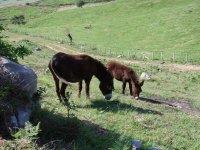 驴相爱卷饼