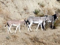 Paseo en burro con Armengol