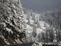 Road and snowy firs