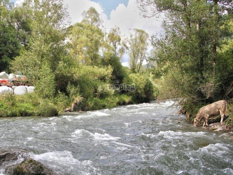 Rio de aguas bravas