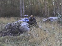 Play paintball with 500 paintballs