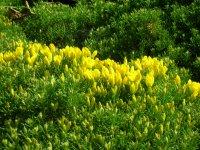 Flora del cmaino