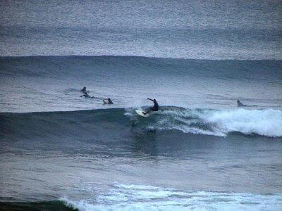 Kiteboarding Surfing Fuerteventura Surf