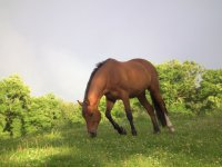 Horse in natural grass