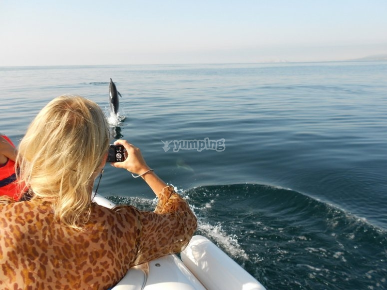 Si hay suerte, veréis cetáceos