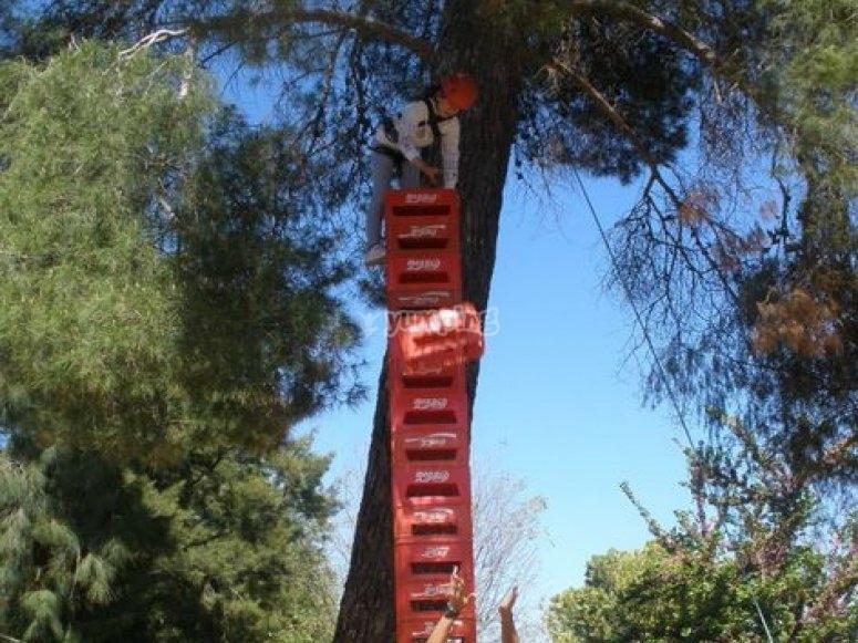 Climbing boxes