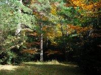 Ingresso nella foresta