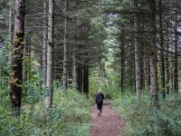 Camminando tra i boschi