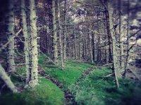 Foreste magiche
