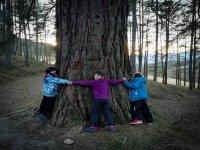Abrazando a un gran árbol
