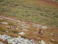 Ciervos en la montaña