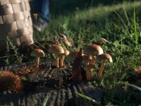 Las setas que habitan en el Parque Natural