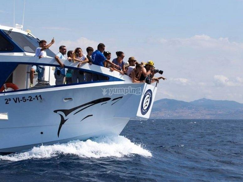 在海峡乘船观看鲸目动物