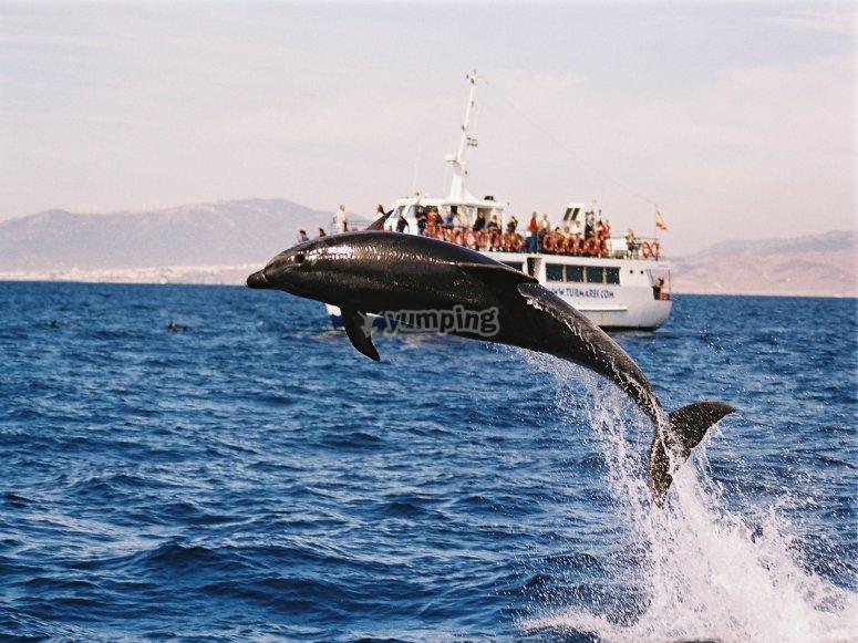 海豚跳到我们的船边