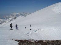 迪亚越野滑雪板在雪地宠物