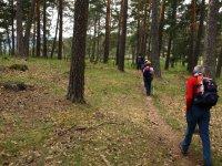 Trekking en el bosque