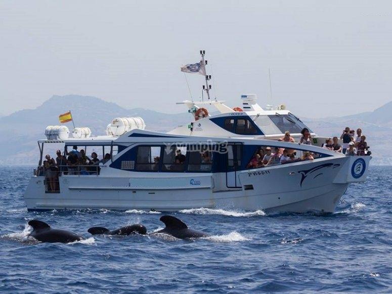 乘船出发去看鲸鱼