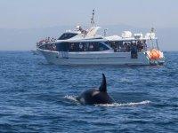 小船和逆戟鲸