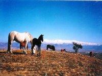 Ruta a caballo por Las Gabias, 2h