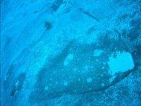 Las rayas se confunden con el fondo marino