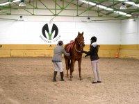 horse guarding