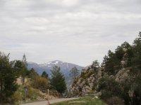 Entre bosques de alta montaña