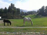 驴子在马匹旁边休息