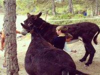 玩驴的孩子