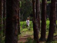 在森林中定向