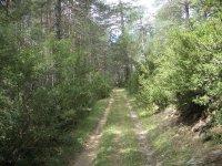 Ruta en BTT en el bosque