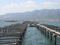Learn to fish in Tarragona