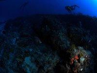 在Delta del Ebro潜水
